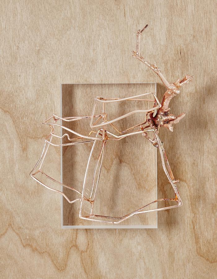 Packaging Brooch 2.  Copper, found objects-organic, steel.  2016